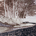 A Different World #1. Groove Of Trees by Claudio Lepri