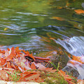 Flowing Water Fall Leaves Closeup by Rusty R Smith