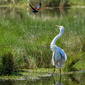 A Disagreement At The Pond by Belinda Greb
