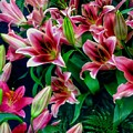 A Display Of Lilies by Joan-Violet Stretch