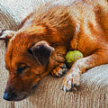 A Dog And His Tennis Ball by Chester Wiker