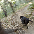 A Dog Backpacking On Pine Ridge Trail by Rich Reid