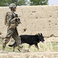 A Dog Handler Of The U.s. Marine Corps by Stocktrek Images