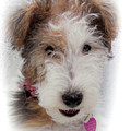 A Dog Named Butterfly by Karen Wiles