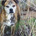 A Dog Named Hoss by Shelli Fitzpatrick