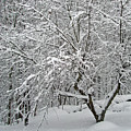 A Dogwood Sleeps While The Snow Falls by Mother Nature