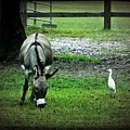 A Donkey And His Bird by Leslie Revels