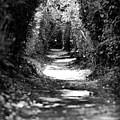A Dreamy Path by Edward Myers