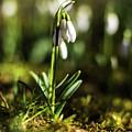 A Drop Of Spring by Silviu Dascalu