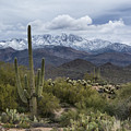 A Dusting Of Snow In The Sonoran Desert  by Saija Lehtonen