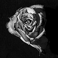 A Fading Rose by David Stone