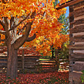A Fall Day by One Peace Images