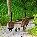 A Family Stroll by Edward Peterson