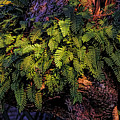 A Fern Botanical By H H Photography Of Florida by HH Photography of Florida