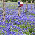 A Field Of Texas Bluebonnets by JC Findley
