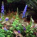 A Field Of Wildflowers by Randy Matthews