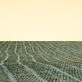A Field Stitched by Todd Klassy