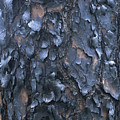 A Fire Scarred Tree Trunk Whose Thick by Taylor S. Kennedy