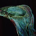 A Fish Called Poe 2 by Julie Niemela