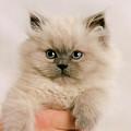 A Fistfull Of Kitten by Crystal Garner