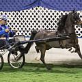 A Flashy Pony by Lynn Sprowl