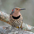 A Flicker Of Sunshine In Winter by Amy Porter