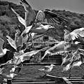 A Flock Of Seagulls Flying High To Summer Sky by Pedro Cardona Llambias