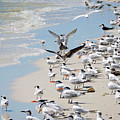 A Flock Of Seagulls by Marilee Noland