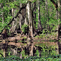 A Florida Riverine Forest 2 by John Trommer