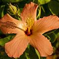 A Flower by Jorge Gaete