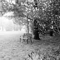A Foggy Spring Morning In Black And White by Trina Ansel