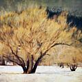 A Forgotten Winter by Tina Baxter