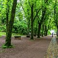 A Freiburg Germany Park by Robert VanDerWal