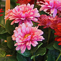 A Fresh Bouquet by CHAZ Daugherty