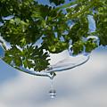 A Fresh Mint Drop by Peter Olsen