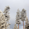 A Frosty Morning 2 by Janie Johnson