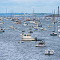 A Full House At Marblehead Harbor Marblehead Ma by Toby McGuire