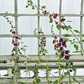 A Garden Greenhouse  by Margie Avellino