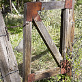 A Gate by Phyllis Denton