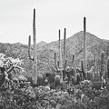 A Gathering Of Cacti by Ann Hudec - Modern Travel Photography