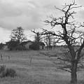 A Ghostly Tree Guards An Abandoned House At Bluestem In Black And White by Charles Robinson