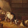 A Goat And Two Sheep In A Stable by MotionAge Designs
