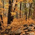 A Golden Autumn Forest  by Saija Lehtonen