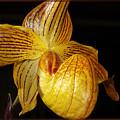 A Golden Slipper by Phyllis Denton