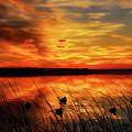 A Golden Sunrise Duck Hunt by Dale Kauzlaric