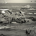 A Good Day Fishing On Monterey Bay In Black And White by Joyce Dickens