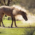 A Good Dust Bath  by Saija Lehtonen