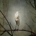 A Great Egret by Al  Mueller