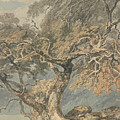 A Great Tree by Joseph Mallord William Turner