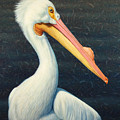 A Great White American Pelican by James W Johnson